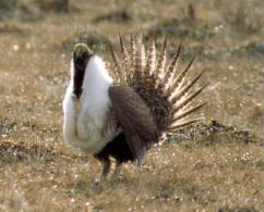 fws.sage_grouse