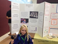 Science Fair: Why do birds eat certain kinds of seeds?