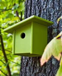Bird House Building Contest