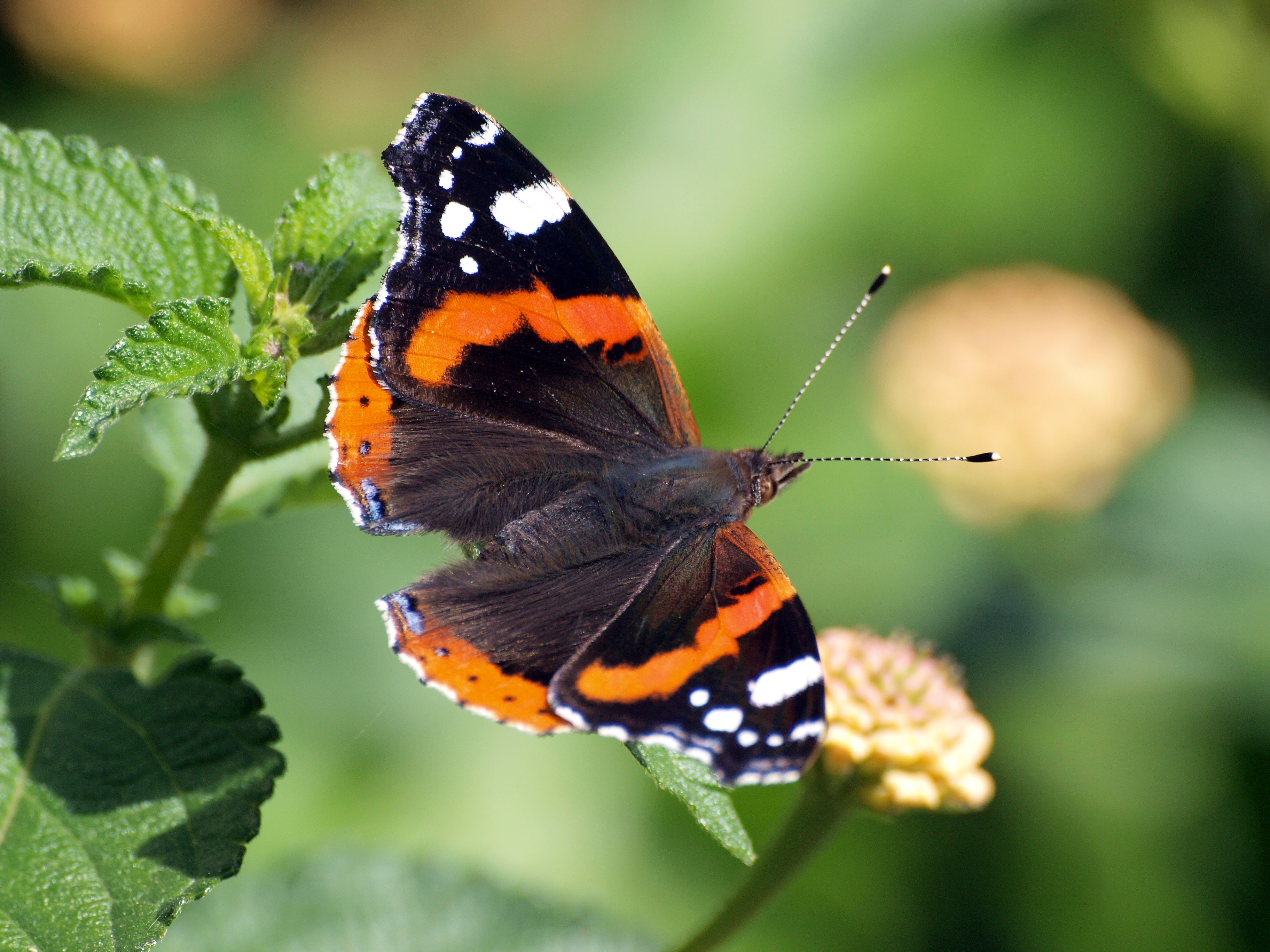 July 23rd, Tony Grove— Birds, Butterflies, and Wildflowers ...