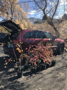 USU Center for Water-Efficient Landscaping (CWEL) Donated Trees for the Denzil Stewart Nature Park Planted Oct 30, 2020 Courtesy & © Hilary Shughart, Photographer