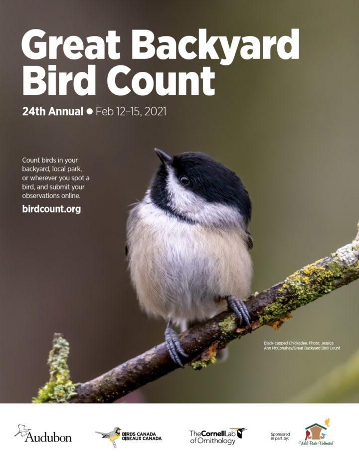 Great Backyard Bird Count-Click to visit www.birdcount.org (Courtesy National Audubon)