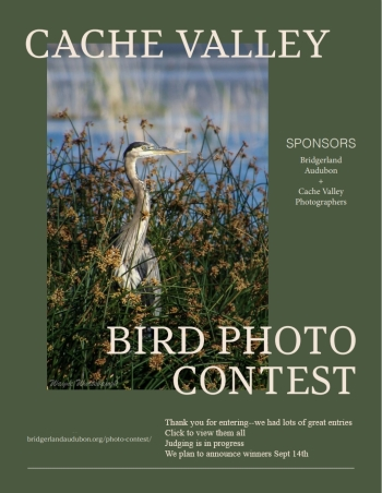 Cache Valley Wild Bird Photo Contest Judging in progress. Click to view entries. We plan to announce winners Sept 14
